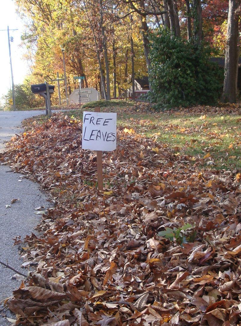 Leaves free Liberty Mills Oct 08