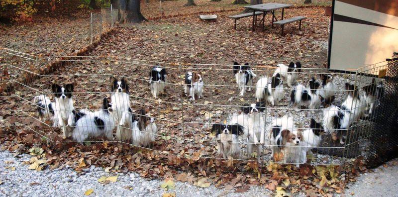 Dogs City Utilities Park Oct 09