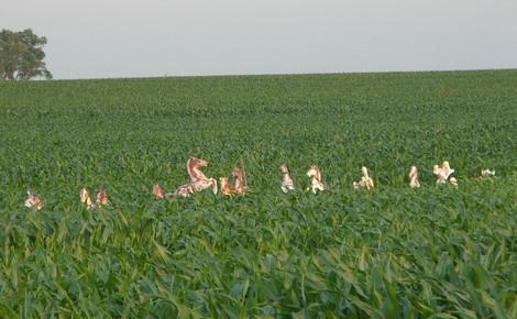 Fort wayne observed cornfield horses - Craigslist fort wayne farm and garden ...